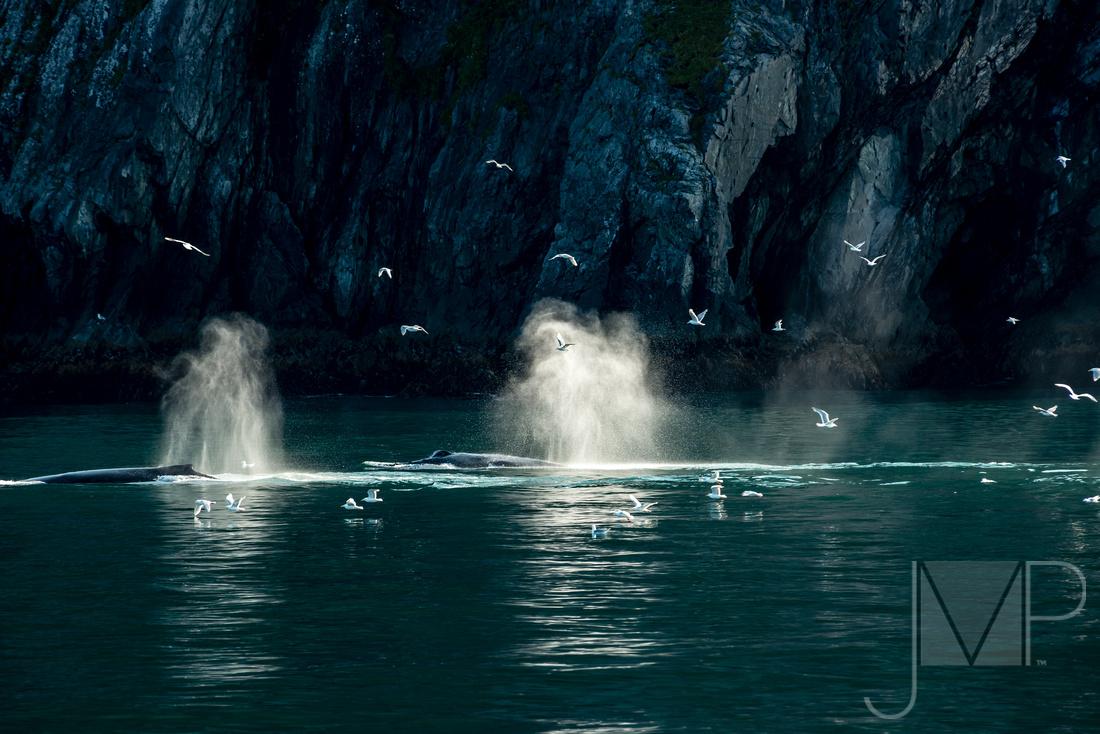 Back lite whales