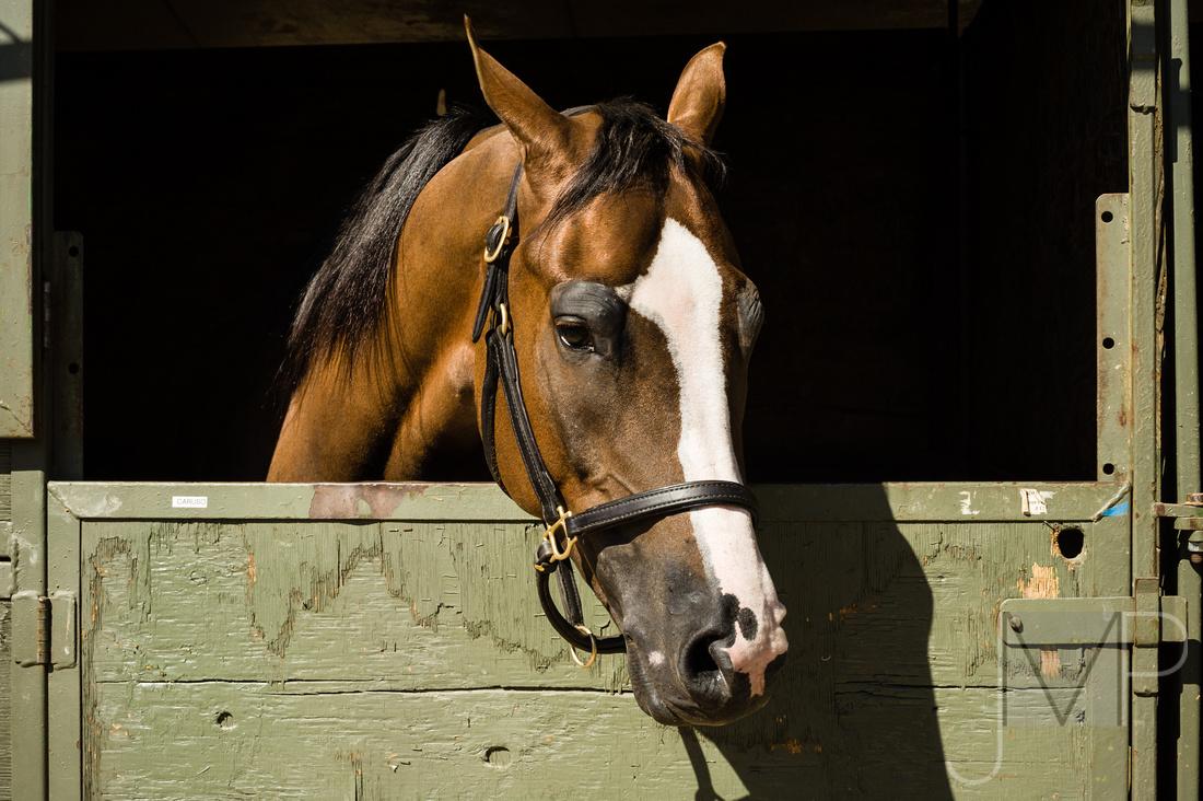 Mid day arabian horse