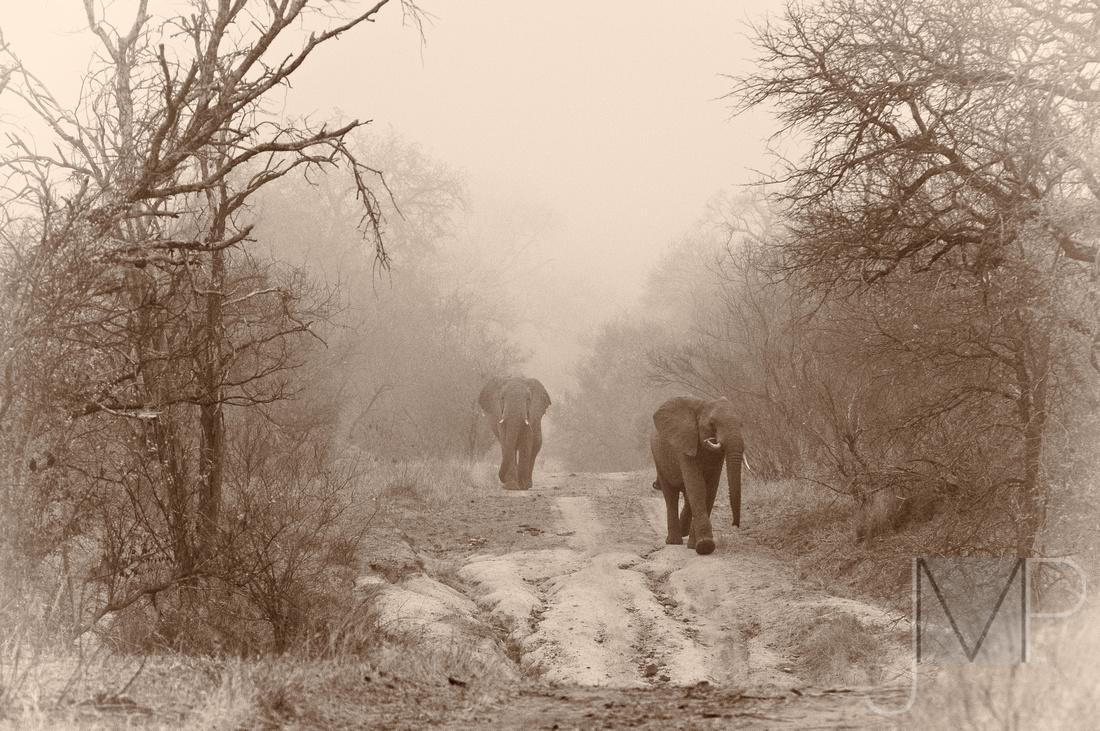 Elephants in the Mist