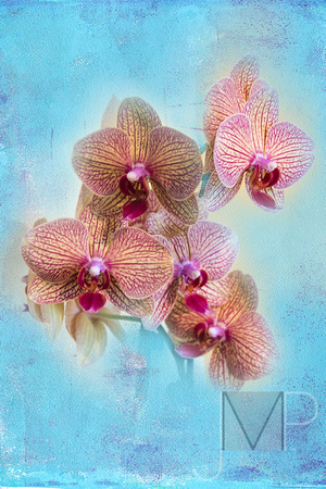 Orchids in a Painting