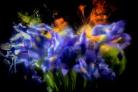 Flower Abstraction 2