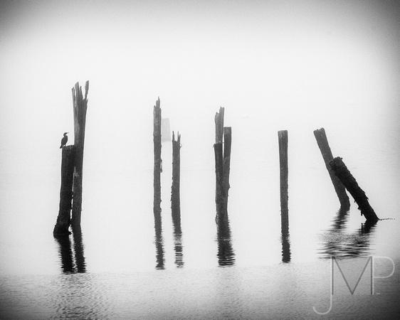 Zen Fog
