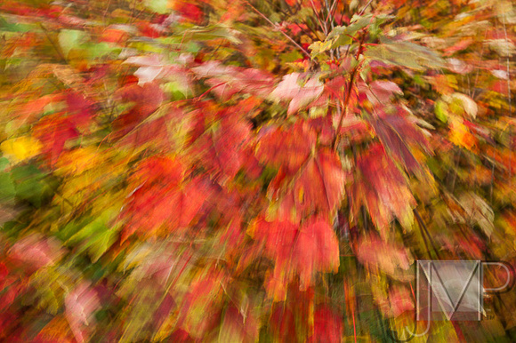Fall Motion