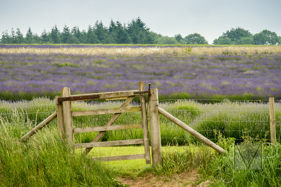 Gate to the Lavender Farm