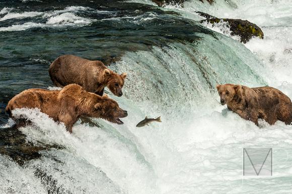 Three Bears fishing