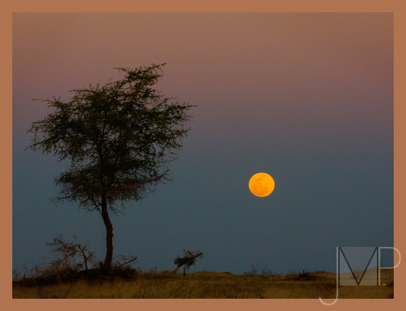 Moon rise on the Banks of the Zambezi
