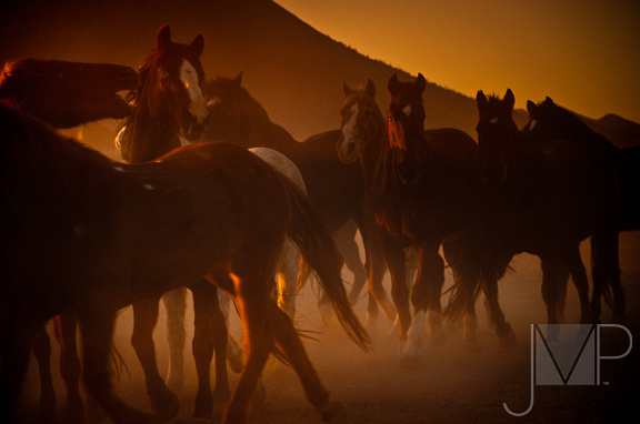 Horse stampede in the morning with dust
