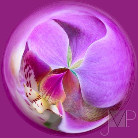 Orchid Fantasy Globe