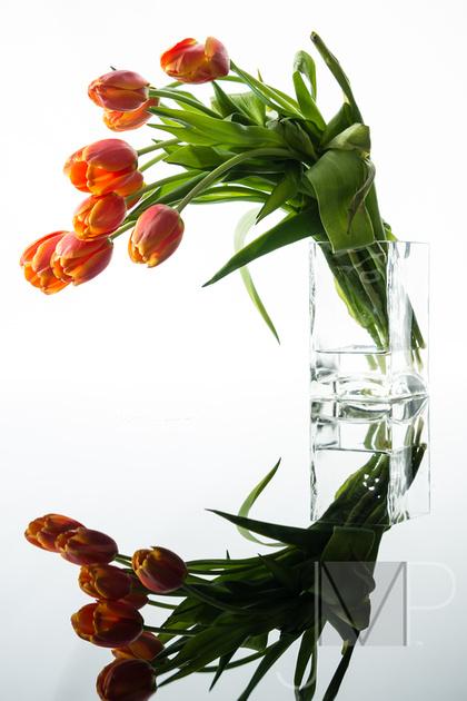 Orange Tulip Circle